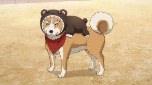 〈织田肉桂信长〉可爱的狗狗头像